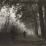 Ultime foglie (Autunno)