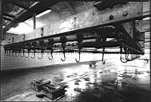 'Tra tagli forti', 1995
