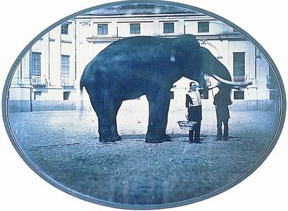 dagherrotipista non identificato, L'elefante di Torino che poi morì pazzo, 1850 (Torino, Archivio Storico della Città)