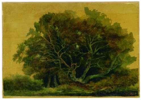 Vecchia quercia, 1989 - acquerello su carta
